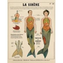 la-sirene-creatures-fantastiques