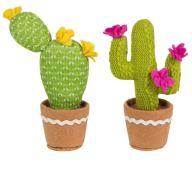 cactus big 2
