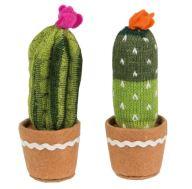 cactus grands2